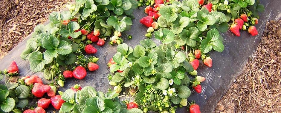 Агротекстиль для сельского хозяйства